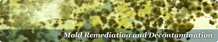 Mold Remediation FAQs