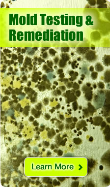 Mold Remediation and decontamination