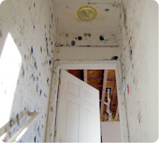 Black mold produces harmful toxins and compounds that affect the immune system